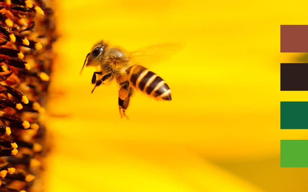 La disparition des insectes est très préoccupante