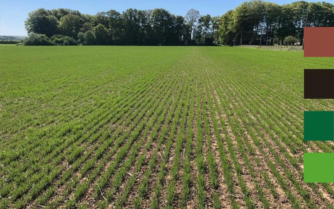 Lin fibre en semis direct : structurer son sol pour s'assurer d'une croissance régulière et riche en fibres